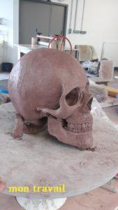 crâne humain en peau d'argile